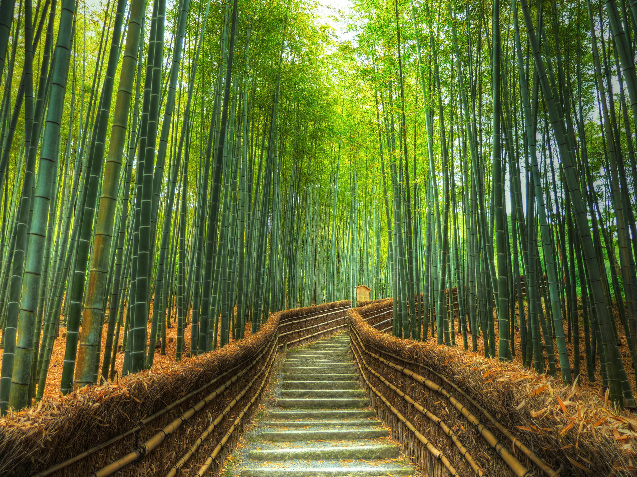 Bamboo Forest In Kyoto Japan T3hwin Com